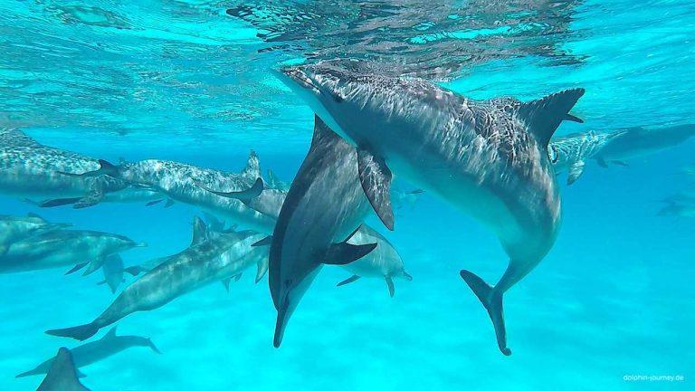 klarer-Blick-auf-die-delfine