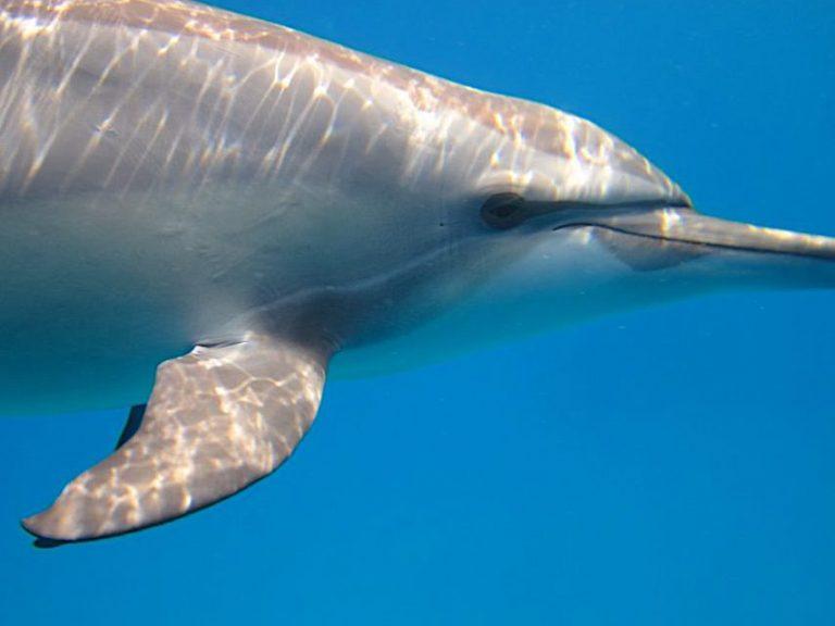 delfin-nahaufnahme