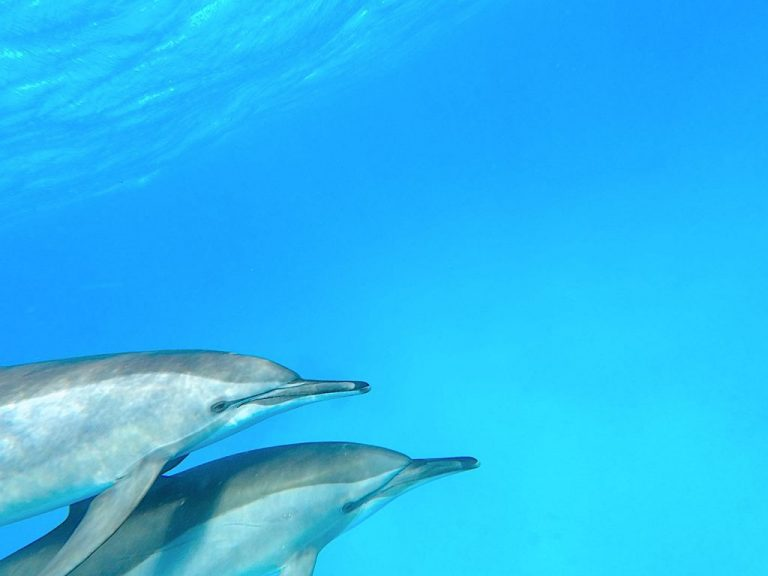 delfine-miteinander-001