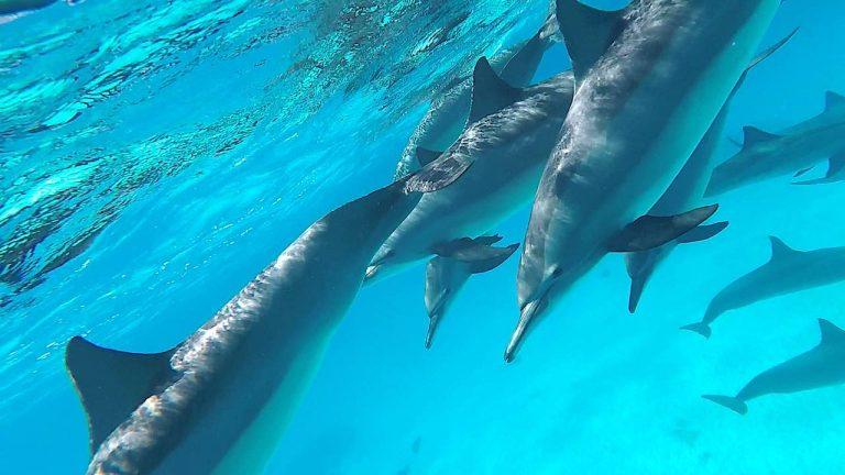 delfine-snap-16
