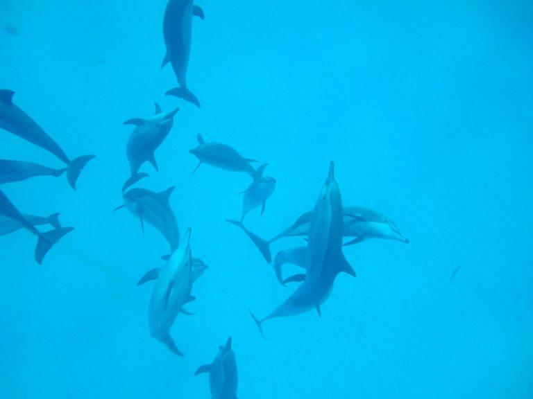 viele-spielende-delfine