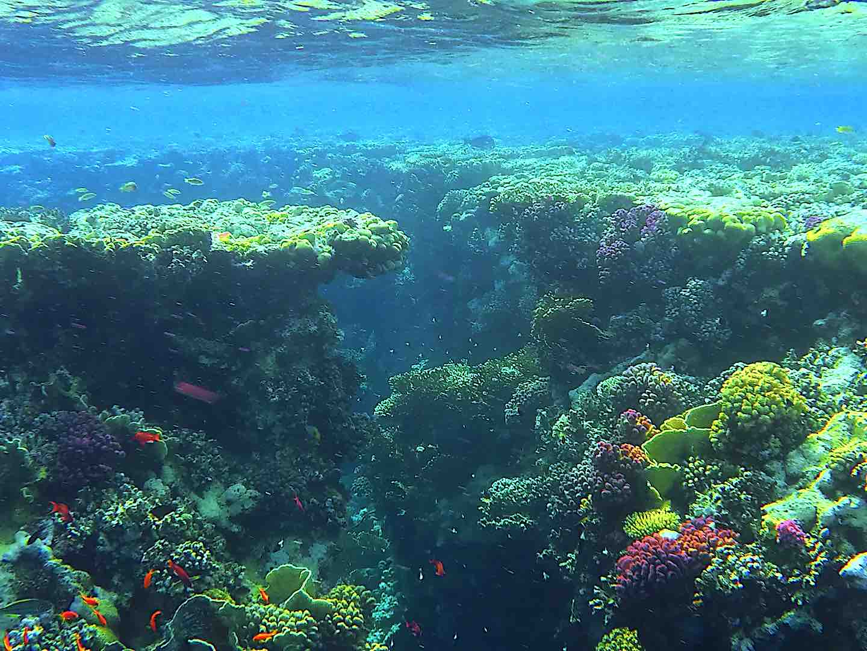 buntes-korallenriff