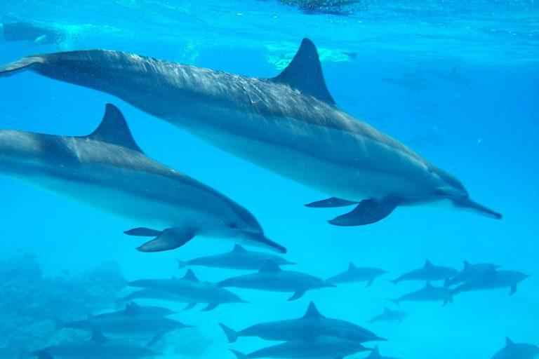 mit-delfinen-schnorcheln