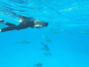 mit-delfinen-schwimmen-002