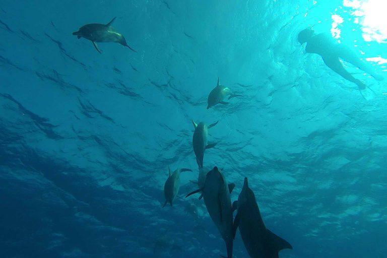 mit-delfinen-schwimmen-von-unten
