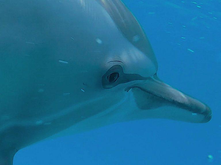suesser-delfin-nahaufnahme