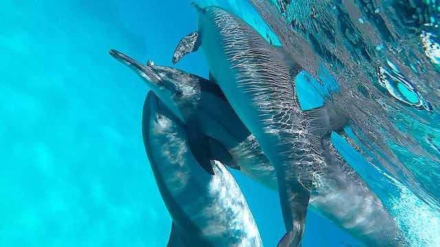 3-delfine-uebereinander-nahaufnahme