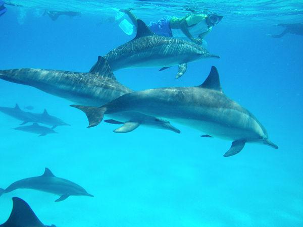 mit-delfinen-schwimmen-001