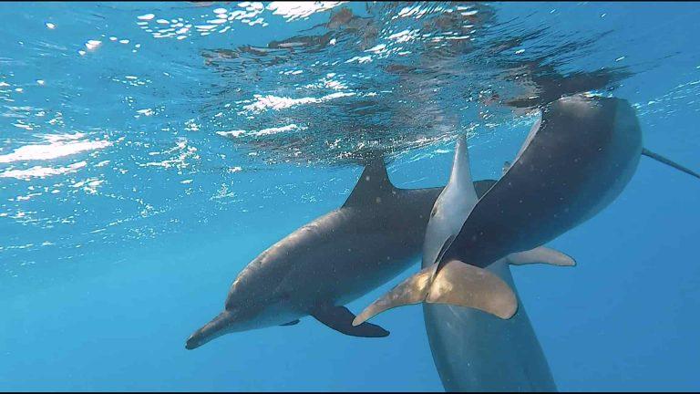 delfintanz